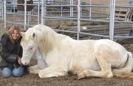 Sylvarr horse