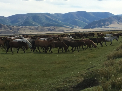 horse-herd-mongolia
